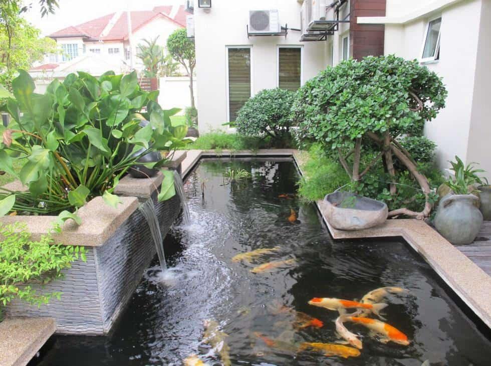 bassin à poisson