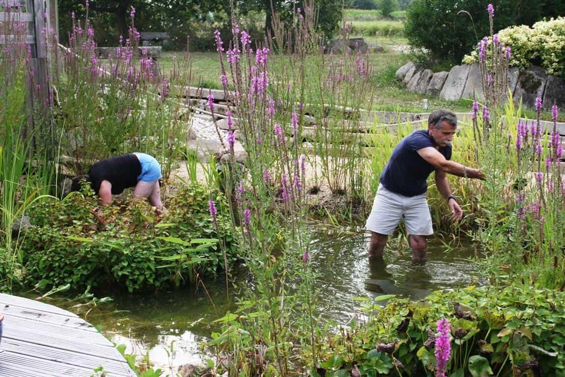 entretien de bassin de jardin