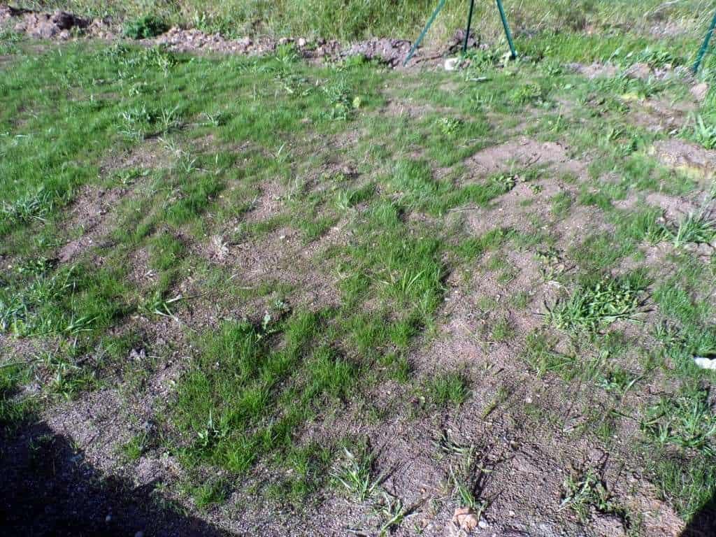pelouse abimee