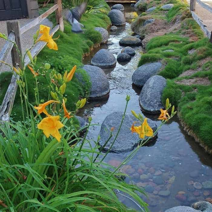 zoysia dans un jardin japonais