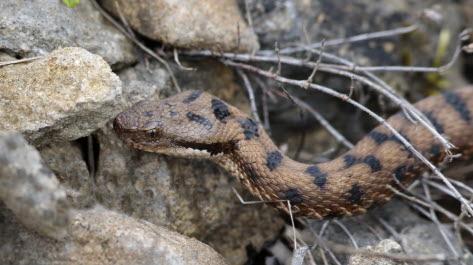 serpent dans un mur