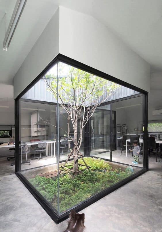 plante pour patio appartement