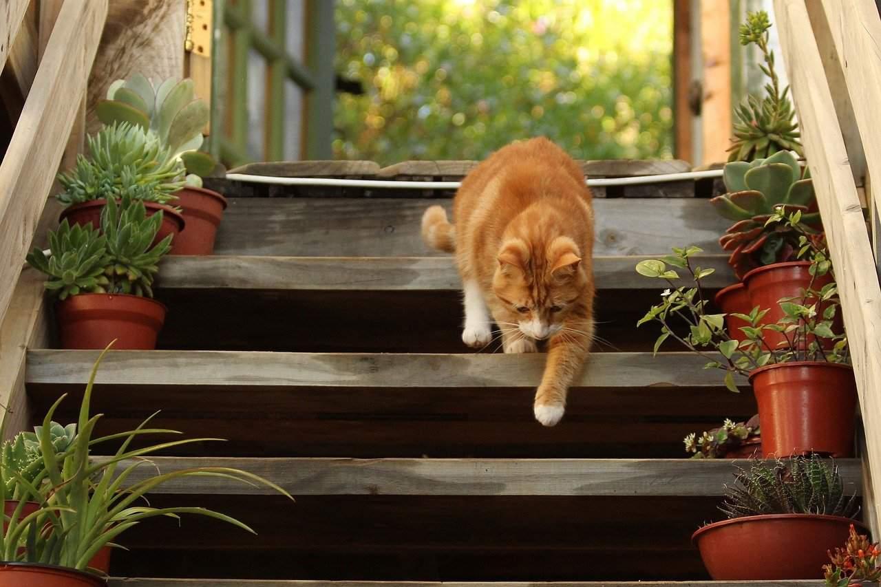 solution antidérapante pour escalier extérieur